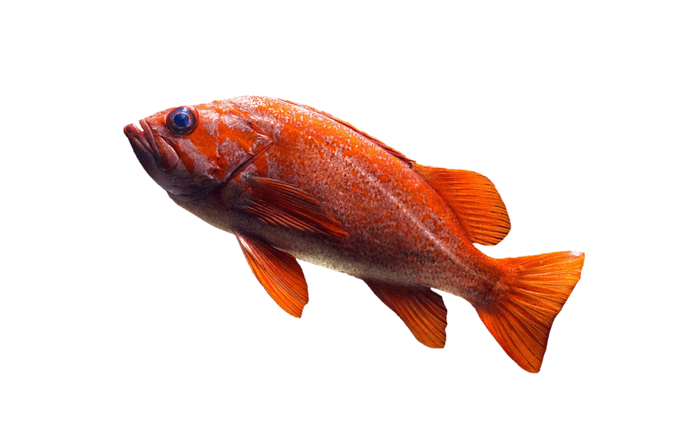 What does it mean when you dream about fish